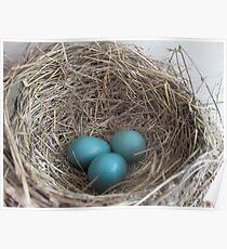 Robin Eggs Poster
