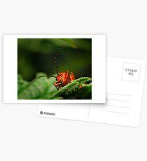 Rhagonycha fulva-Soldier Beetle Postcards