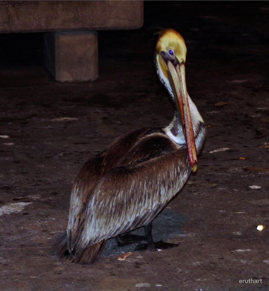 Pelican 0876 by eruthart