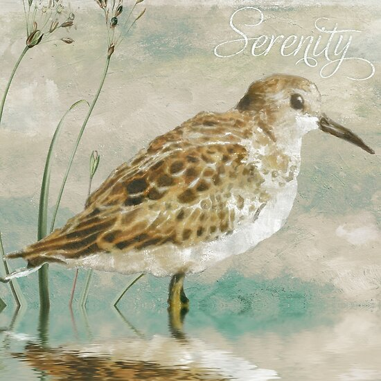 Beach Sandpiper I by mindydidit