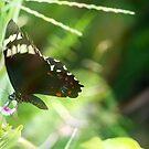 Green butterfly by Virginia McGowan