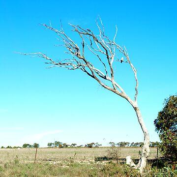 galah in tree by jembot