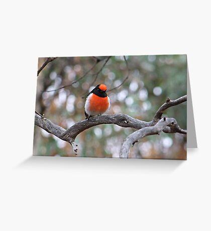 Robin in May Greeting Card