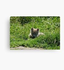 Little Irresistable!! Canvas Print