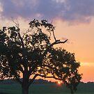 70 Sunset by kellyjohess