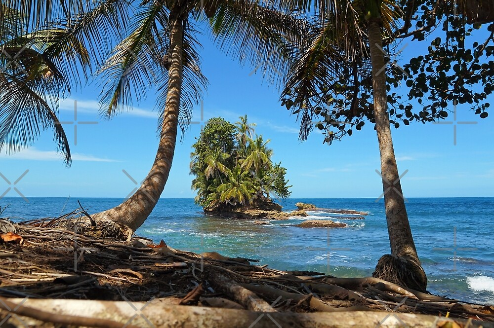 Coconut trees and a lush tropical islet by Dam - www.seaphotoart.com