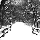Snowy Day on the Trail by Brian Gaynor