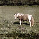 Pony by friendlydragon