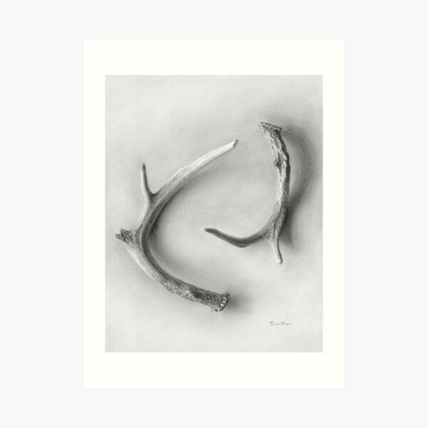 Yin & Yang - A graphite drawing of deer antlers by Brooke Figer Art Print
