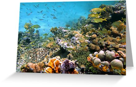 Sea turtle in a coral reef with shoal of tropical fish by Dam - www.seaphotoart.com