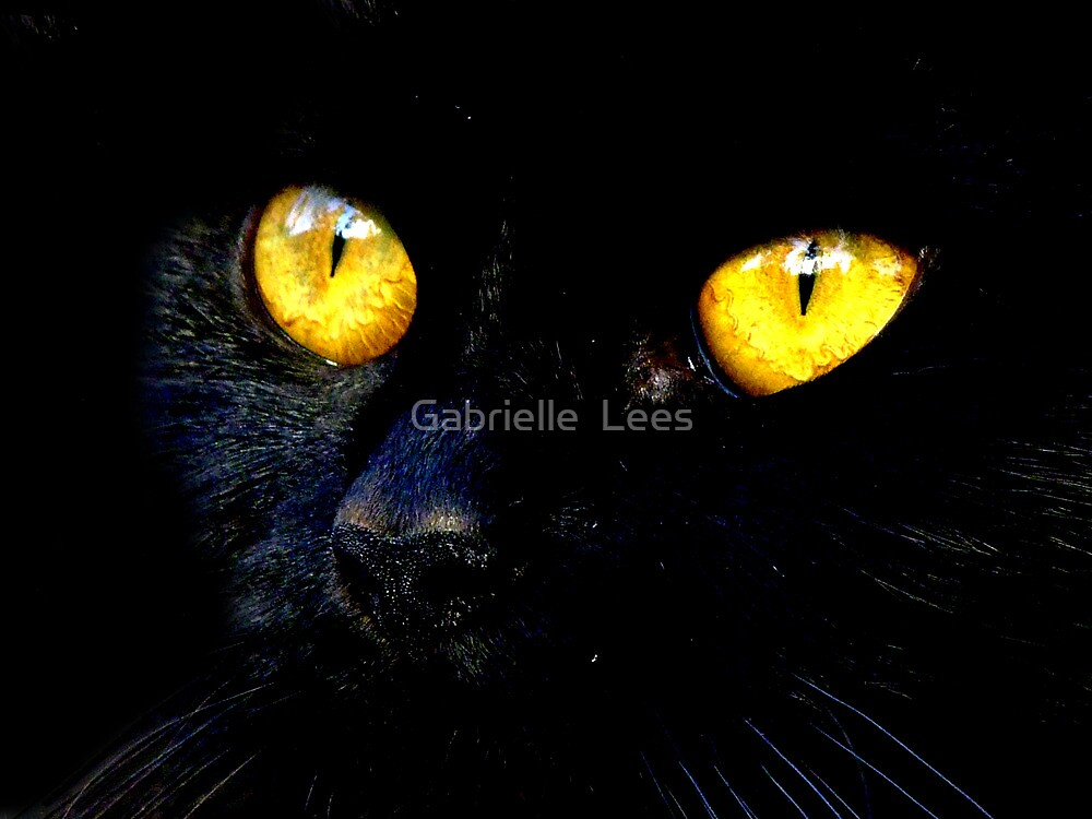 Black Cat by Gabrielle  Lees