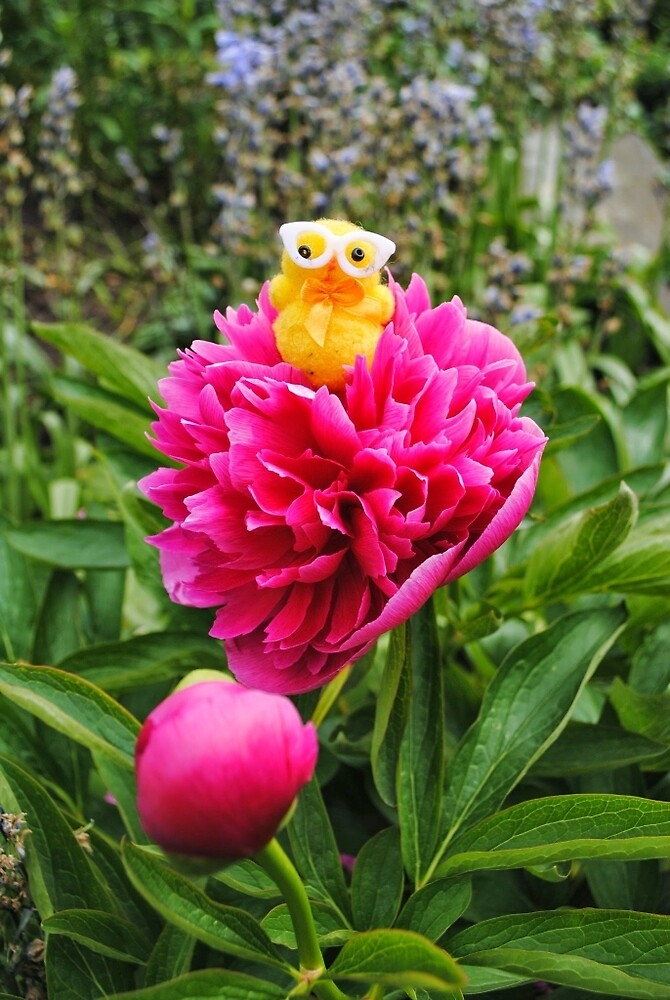 Chick on Bloom by Humperdink