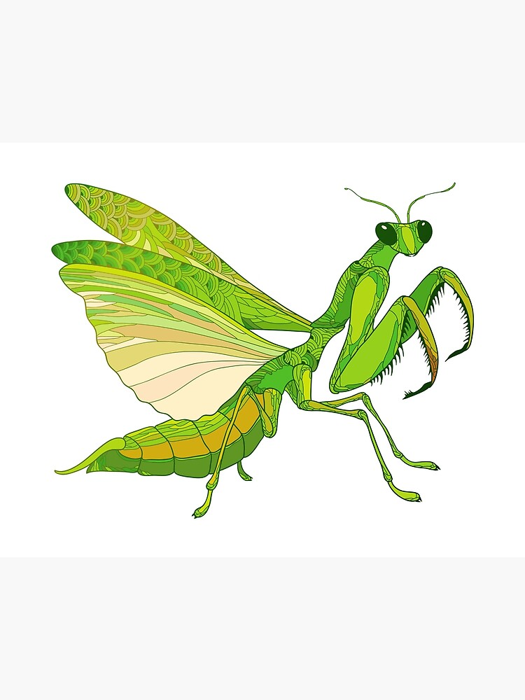 Mantis Religiosa Or Praying Mantis Art Board Print By Bokasana