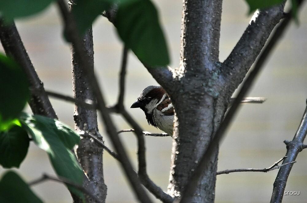 Hiding in Trees by srosu