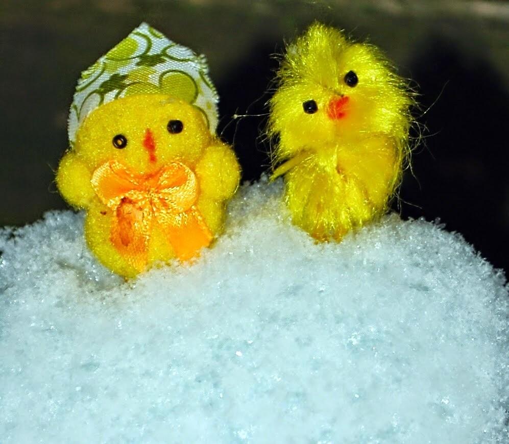 Chicks on Snow by Humperdink