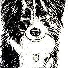 Border Collie Dog - Drawing by Sandy1949