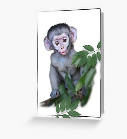 Vervet Monkey baby on white background Greeting Card