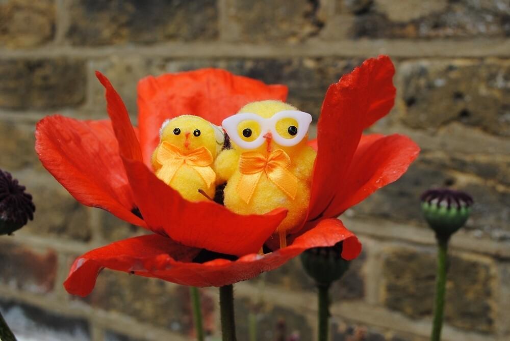 Chicks in Poppy by Humperdink
