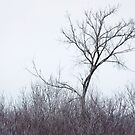 The Tree on the Hill by April Koehler