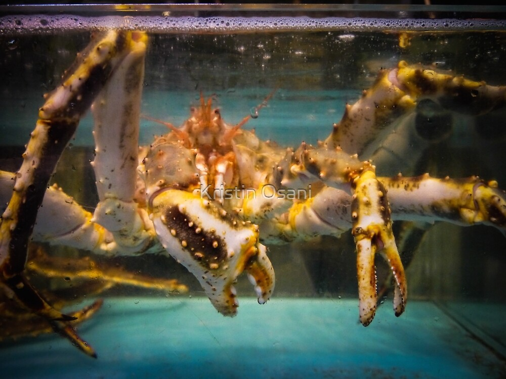 The Crab in the Window by Kristin Osani