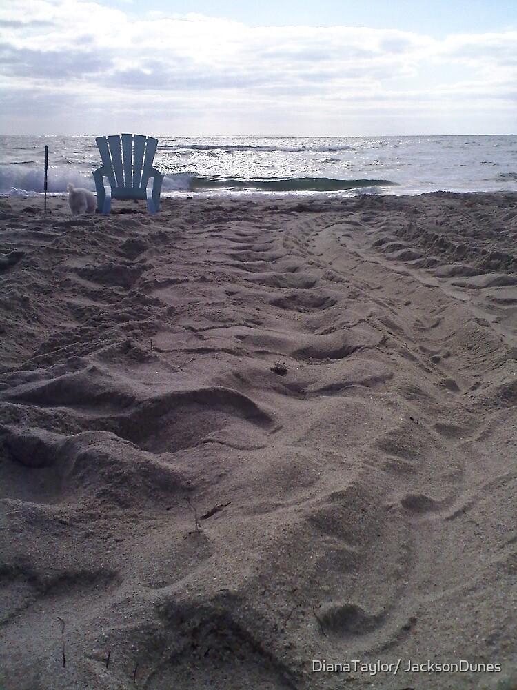 Turtle Tracks by DianaTaylor/ JacksonDunes