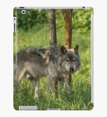 Timber wolf in summer iPad Case/Skin