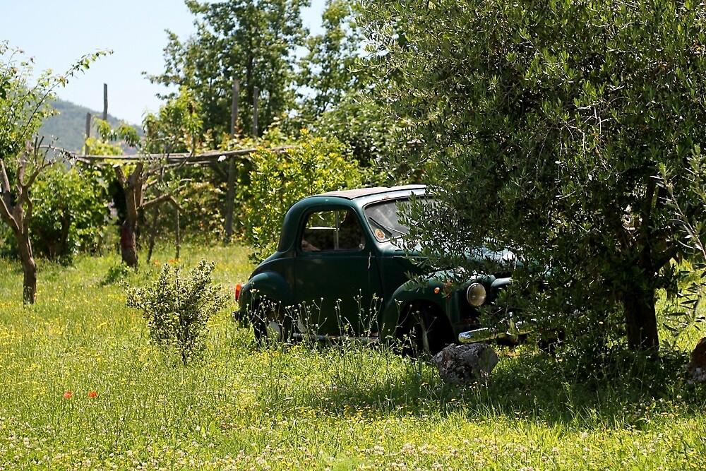Amalfi Orchard by AlistairBlake