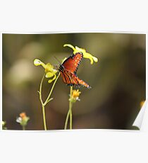 Nectar in the afternoon - butterfly & flowers Poster