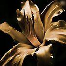 Daylily - my garden, Ottawa, Ontario by Tracey  Dryka