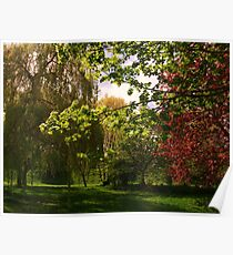 Colourful Spring Trees in the Sunshine Poster