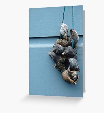 Shells, Leiden Greeting Card