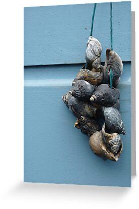 Shells, Leiden by Lenka