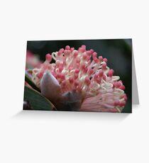 young Pincushion Hakea flower opening Greeting Card