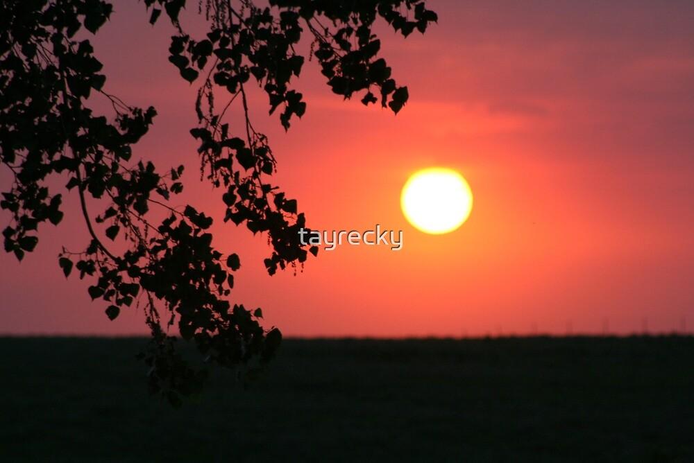 Sun by tayrecky