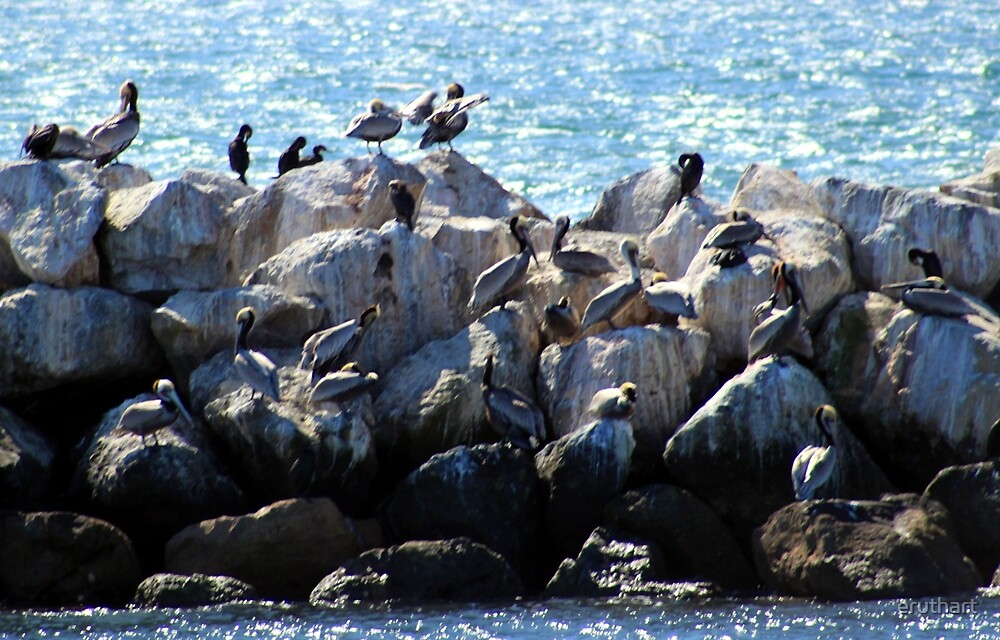 Pelican Neighborhood 1136 by eruthart