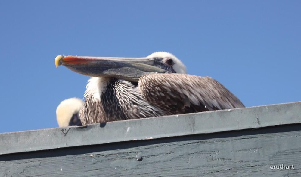 Pelican 1182 by eruthart