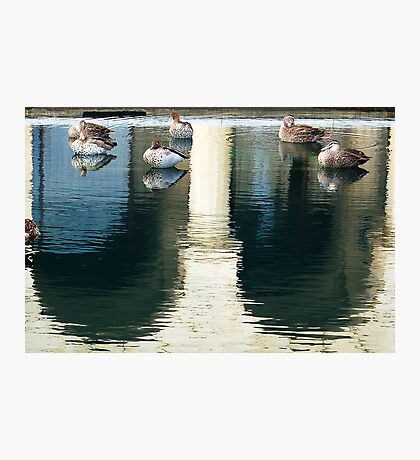Winthrop Hall Reflection & Ducks Photographic Print