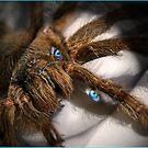 Arachnophobic by Kym Howard