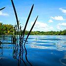 Lake by Lazereth-Art