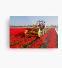 The end of the tulip season..... Metal Print
