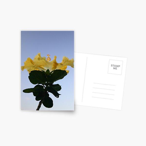 Hibiscus ''Illuminate'' Postcard