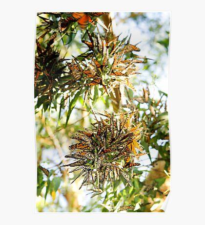 Butterfly Burst. Poster