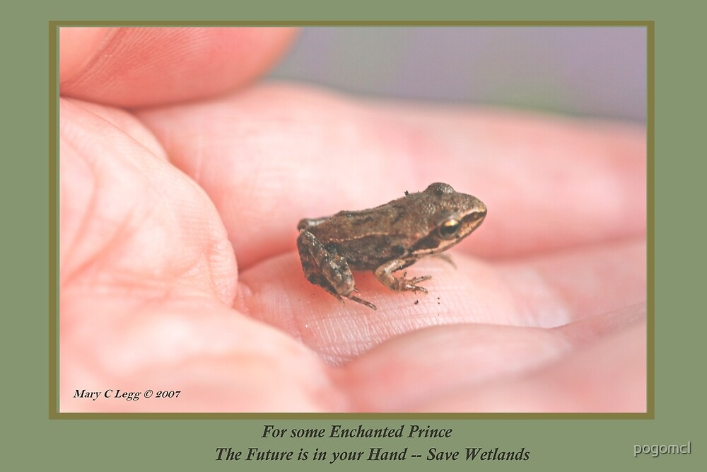 Some Enchanted Prince His Future is in Your Hand—Save Wetlands B by pogomcl