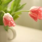Pink Frilled Petal Tulips by Wendy Kennedy