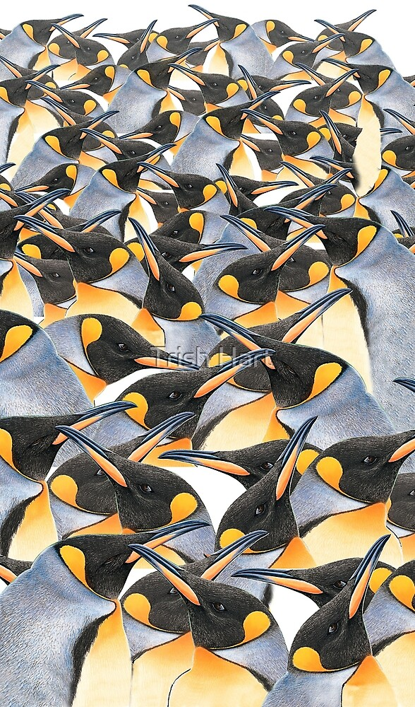King penguin mob by hartpix