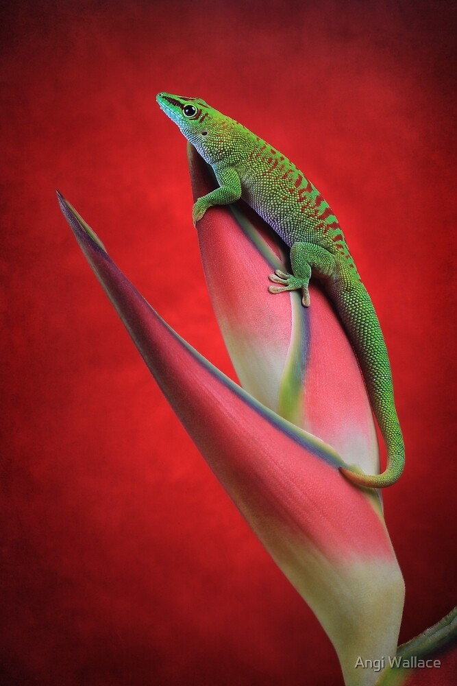 Day gecko by Angi Wallace