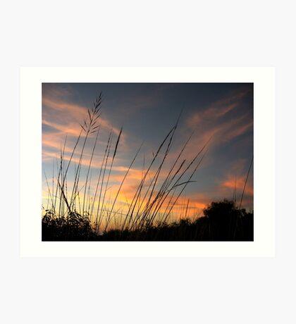 Native grasses Art Print