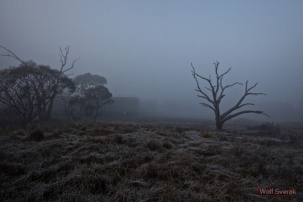 Winter Morning Fog at the Pinnacle in Canberra/ACT/Australia (3) by Wolf Sverak