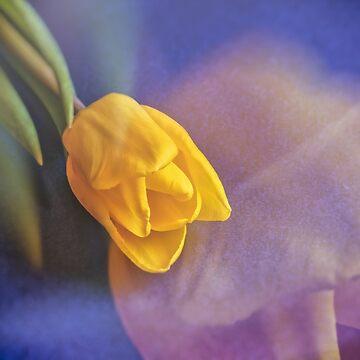 Yellow Tulip by wekegene