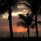 Palm Tree contrast by JimSanders